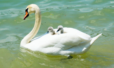 Отчет о проведении мероприятия, посвященного Дню матери.