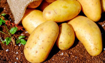 Спонсорская поддержка. Картофель.